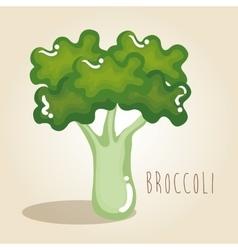 broccoli fresh vegetable vector image