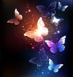 Night butterflies vector