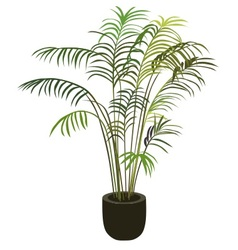 Tropical palm tree in flowerpot vector