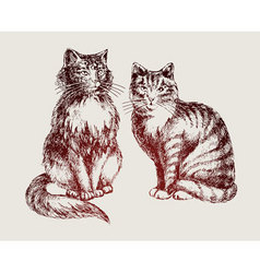 cats sketch vector image vector image