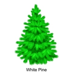 Christmas tree like white pine for New year vector image vector image
