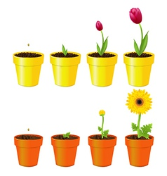 Flowers in pots vector