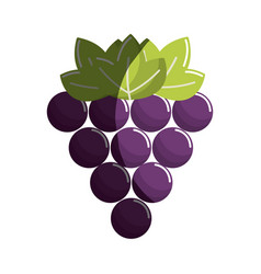 Grapes fruit icon image vector