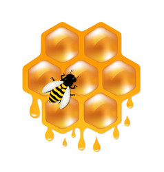 honeycombs with bee vector image vector image