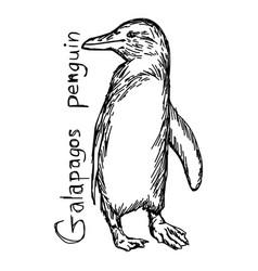 Galapagos penguin vector