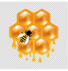 Honeycombs with bee vector