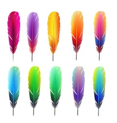 Set of colorful feathers vector
