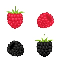 Berries of raspberry and blackberry vector