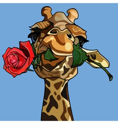 Giraffe holding a rose in its mouth vector