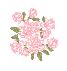 hand drawn magnolia flowers isolated on white vector image