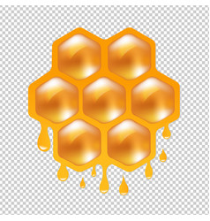 Honeycombs with transparent background vector