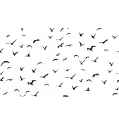 Seagulls flying seamless pattern vector image