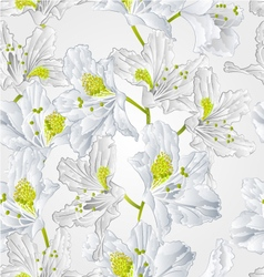 Seamless texture rhododendron white flower vector