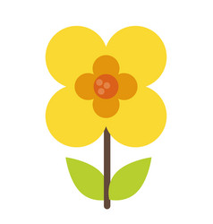 buttercup flower natural image vector image