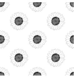 sunflower seamless on white background vector image