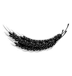 spikelet of wheat vector image