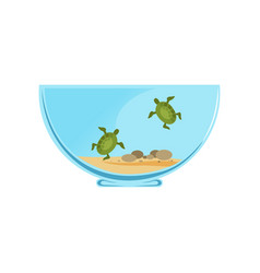 Bowl terrarium with little swimming turtles vector