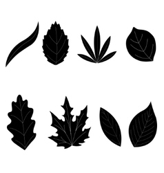 Leaf collection - silhouette vector image