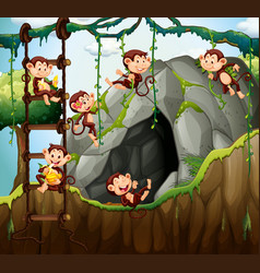 scene with monkeys playing in the cave vector image