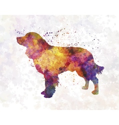 American water spaniel in watercolor vector