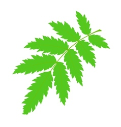 Green rowan leaf vector
