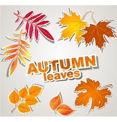 set autumn leaves vector image
