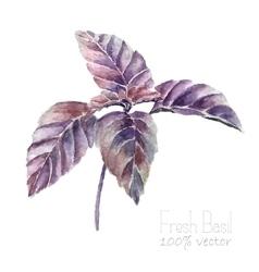 Basil leaves watercolor vector