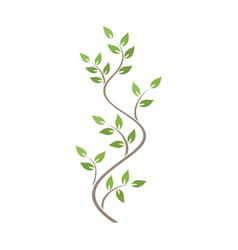 Natural ornamentation with green ivy on white vector