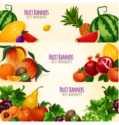 fruits exotic and garden banners set vector image