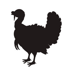 turkey bird farm vector image