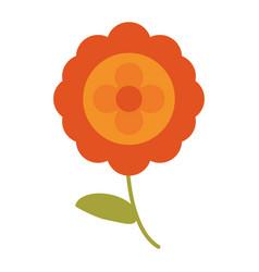 aster flower natural image vector image