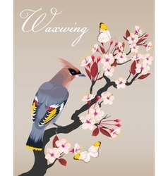 Waxwing on the cherry branch vector