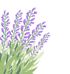 Watercolour lavender flower card vector