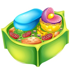 Plant cell vector