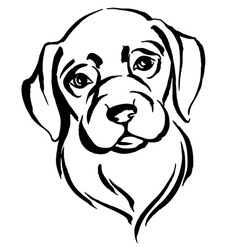 Hand drawn portrait of dog labrador black and vector