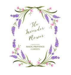 elegant card with lavender flowers vector image