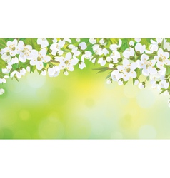 Floral white background vector