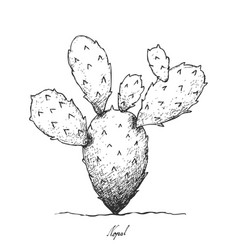 Hand drawn of nopal cactus on white background vector