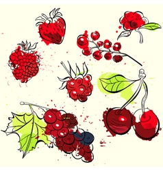 Stylized fruit and berries vector