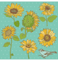 Flower set detailed hand drawn sunflowers vector