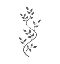 natural ornamentation with ivy on white background vector image
