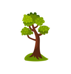Summer deciduous tree vector
