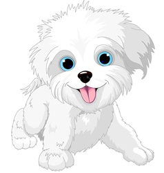 Playful lap-dog vector image vector image