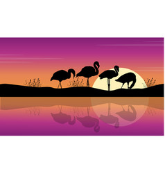 collection lake scene with flamingo silhouettes vector image vector image