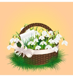 Spring bouquet of snowdrop vector