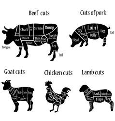 Butcher chart vector image vector image