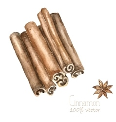 Watercolor cinnamon and anise vector