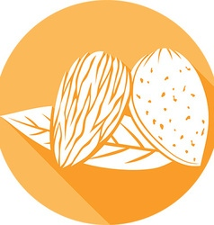Almond with leaves icon vector