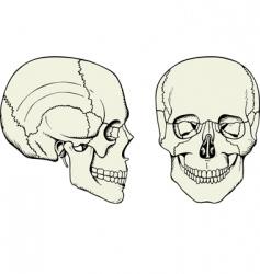 cranium vector image vector image
