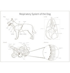 Respiratory system of the dog vector